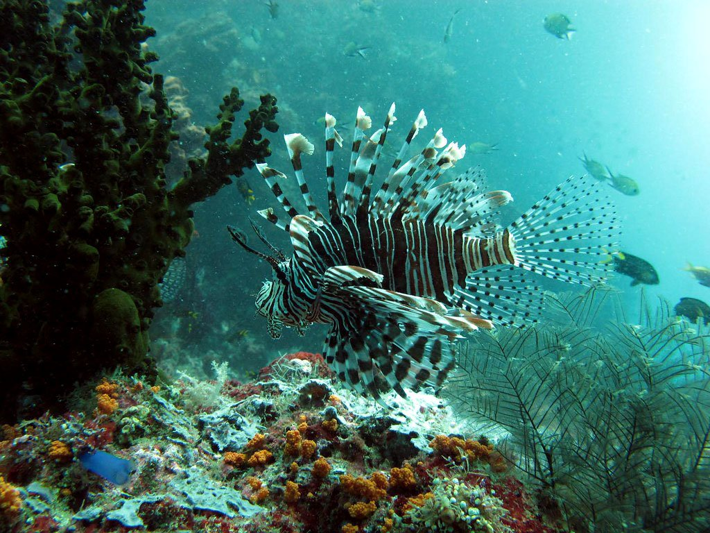 top 10 diving destination raja ampat